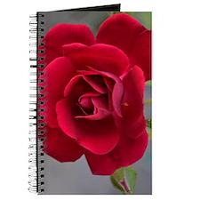 Red Rose Blossom Journal