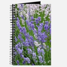 Pink and purple lavender field Journal