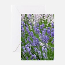 Pink and purple lavender field Greeting Cards