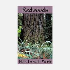 Redwoods National Park (Vertical) Decal
