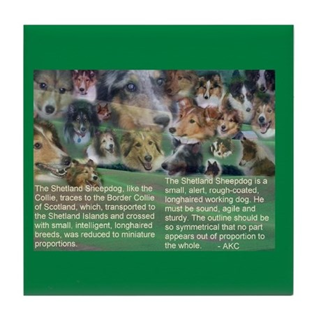 Shetland sheepdog Tile Coaster