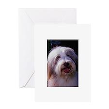 Bearded Collie Photo Greeting Card