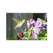 Pansy Hummingbird Rectangle Magnet