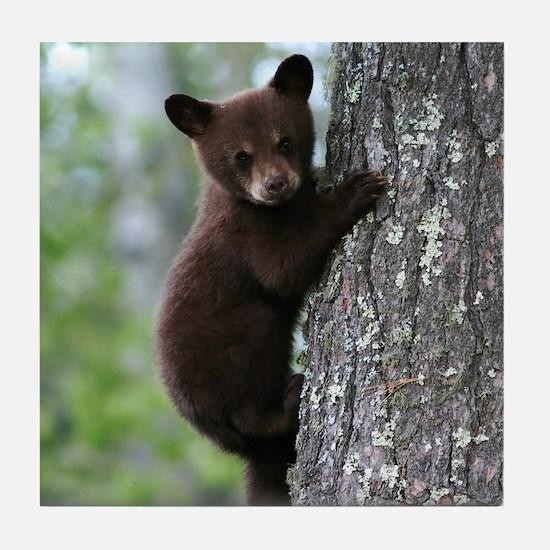 Bear Cub Climbing a Tree Tile Coaster