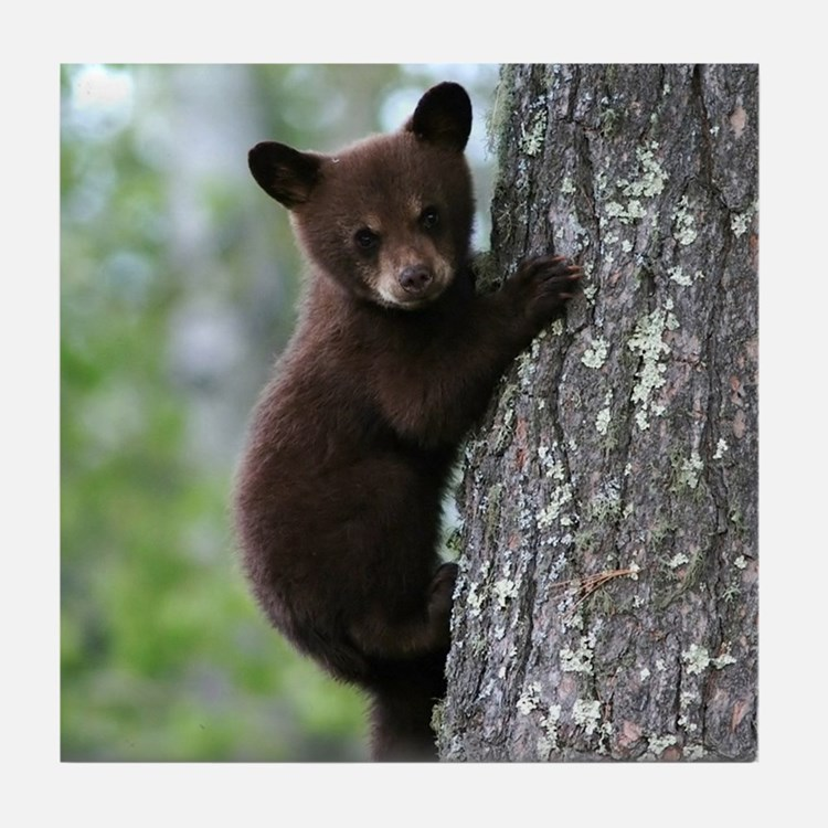 Bear Cub Climbing a Tree Tile Coaster