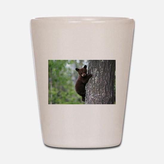 Bear Cub Climbing a Tree Shot Glass