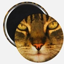 Gray Striped Cat Face Magnet