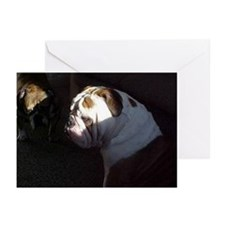 Bully Greeting Cards (Pk of 10)