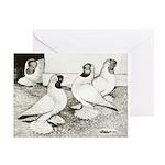 Moorhead Tumbler Pigeons Greeting Cards (Pk of 20)