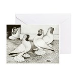 Moorhead Tumbler Pigeons Greeting Cards (Pk of 10)