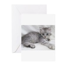 Funny Kitten Greeting Cards (Pk of 10)
