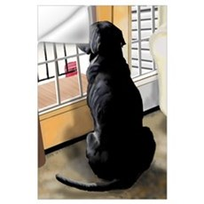 Ajax Watches the World Go By Wall Decal