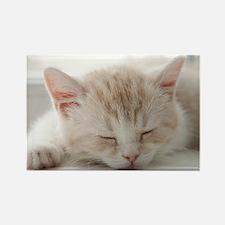 Sleepy Kitten Rectangle Magnet