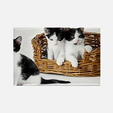 Kitten Trio Basket Rectangle Magnet