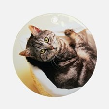 Tabby in Basket Round Ornament