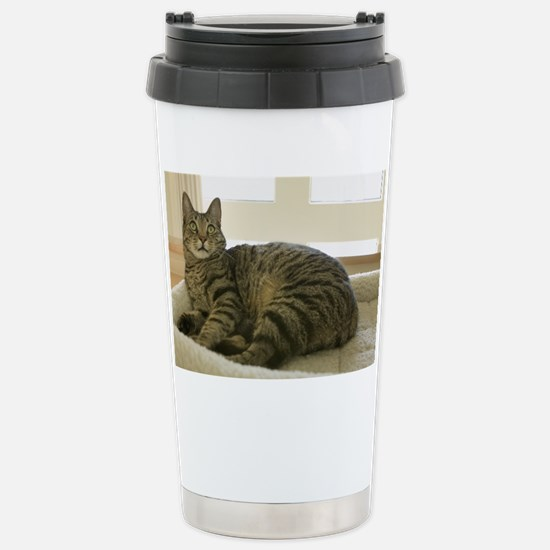 Catbed Kitty Stainless Steel Travel Mug