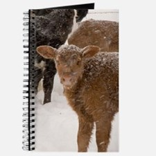 Calves in The Snow Journal
