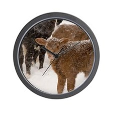 Calves in The Snow Wall Clock