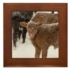 Calves in The Snow Framed Tile