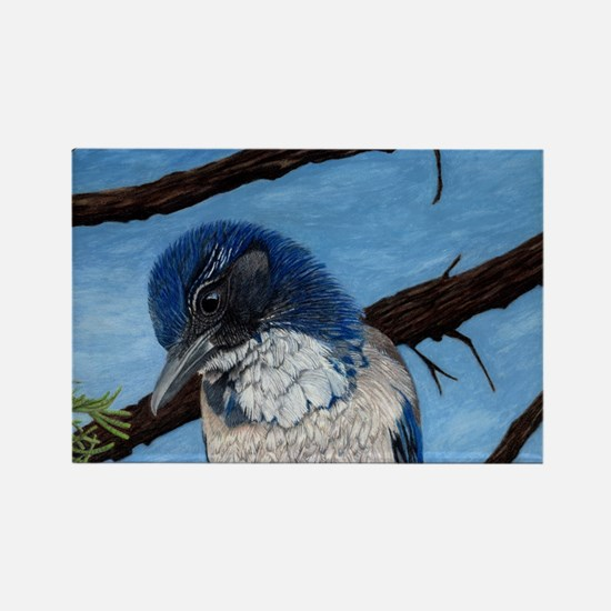 Beautiful Western Scrub Jay Rectangle Magnet