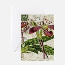 vintage french botanical orchid Greeting Cards