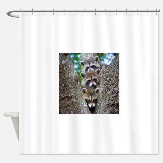 Baby Raccoons Shower Curtain