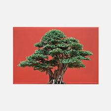Yew bonsai Magnets