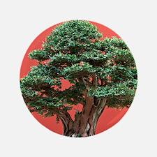 Yew bonsai Button