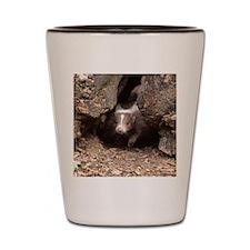 baby skunk Shot Glass