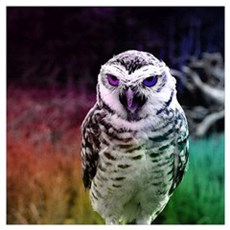 fascinating OWL, rainbow Poster