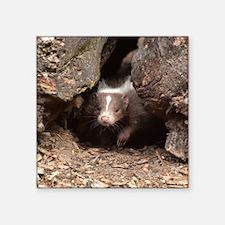 "baby skunk Square Sticker 3"" x 3"""