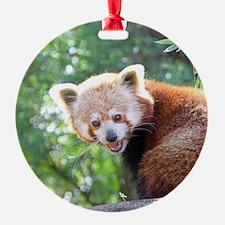 RedPanda20150813 Ornament