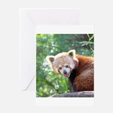 RedPanda20150813 Greeting Cards