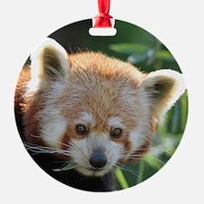RedPanda20150816 Ornament