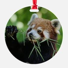 RedPanda20150818 Ornament