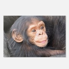 baby Chimpanzee Postcards (Package of 8)