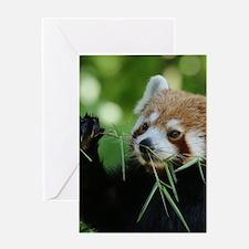 RedPanda20150818 Greeting Cards