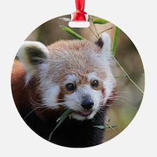 RedPanda20150802 Ornament