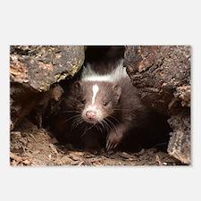 baby skunk Postcards (Package of 8)
