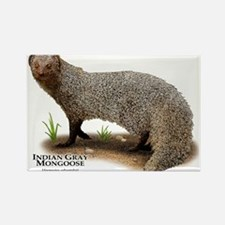 Indian Gray Mongoose Rectangle Magnet