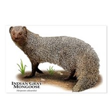 Indian Gray Mongoose Postcards (Package of 8)