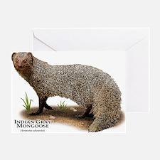 Indian Gray Mongoose Greeting Card