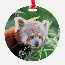 RedPanda20150805 Ornament