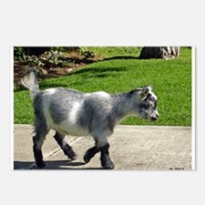 Pygmy Goat Postcards (Package of 8)