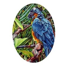 Macaw Parrot Colorful Tropical Bird  Oval Ornament