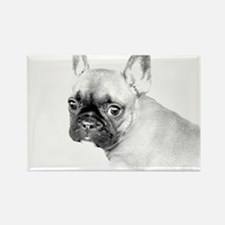French Bulldog puppy Magnets