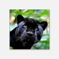 Black Panther Cat Sticker