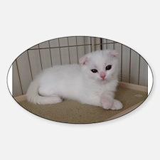 scottish fold white kitten Decal