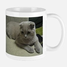 laying 2 scottish fold Mugs