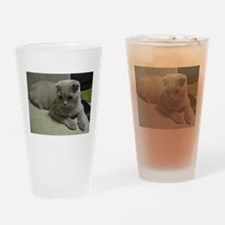 laying 2 scottish fold Drinking Glass